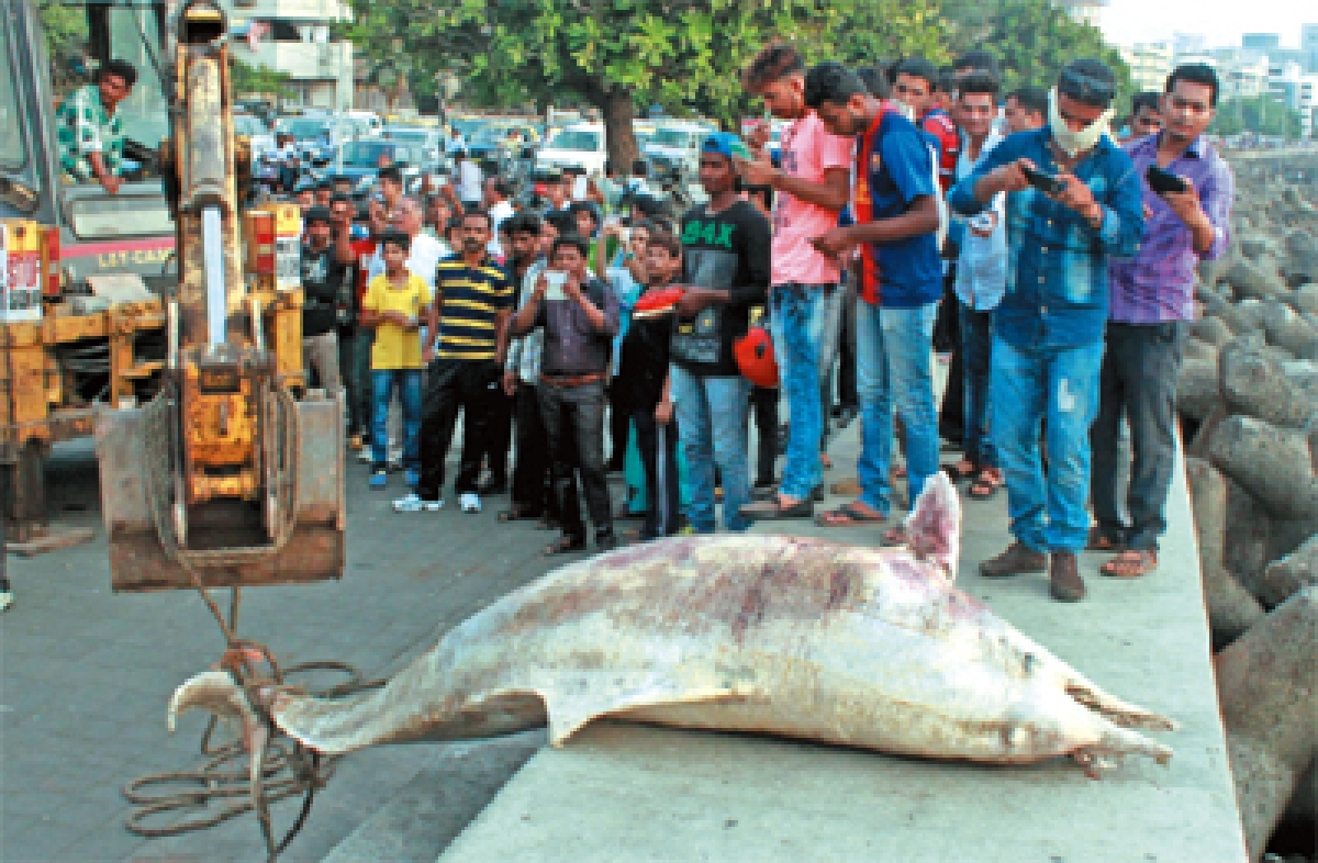 BMC is at sea when dealing with marine animals