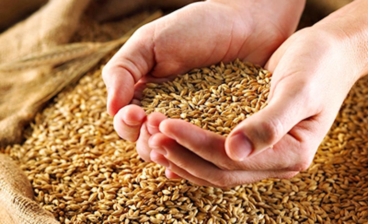 Madhya Pradesh 2020-21 key Kharif crop procurement at 1.4 mln ton