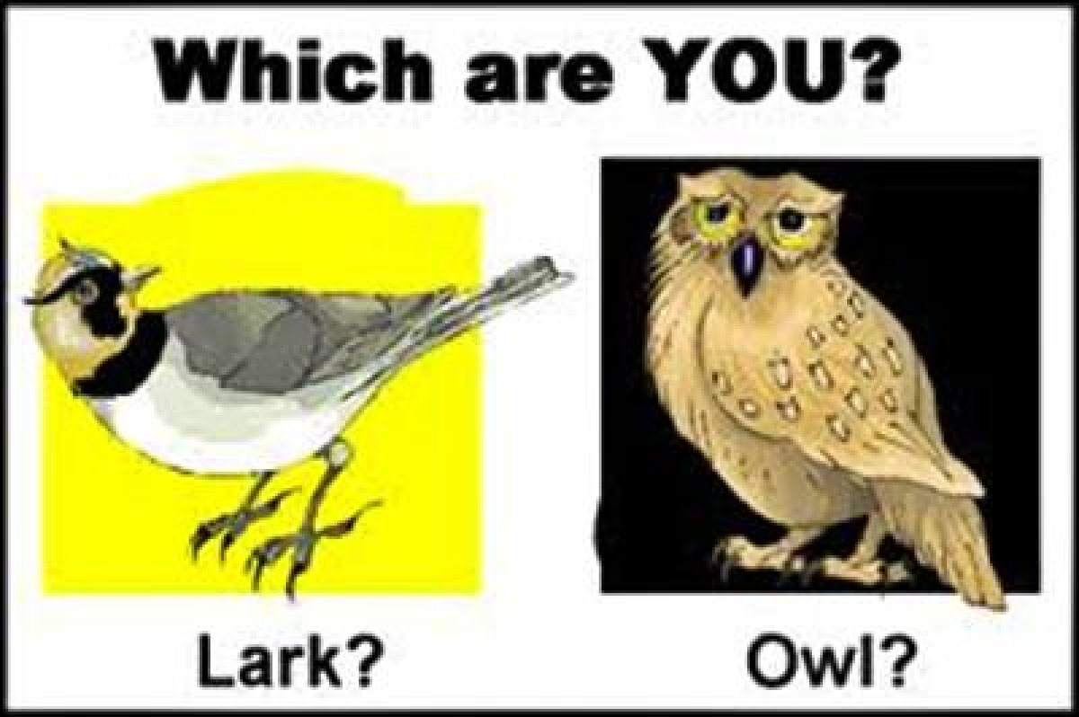 Genetic clues behind what makes you `day lark` or `night owl` identified