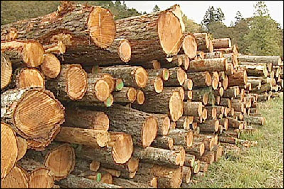 Chopping trees is ok for development, say Mumbaikars