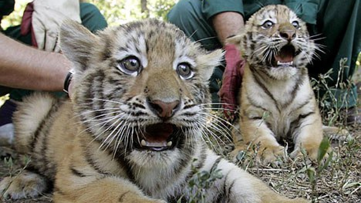 Cubs/ Representative Pic