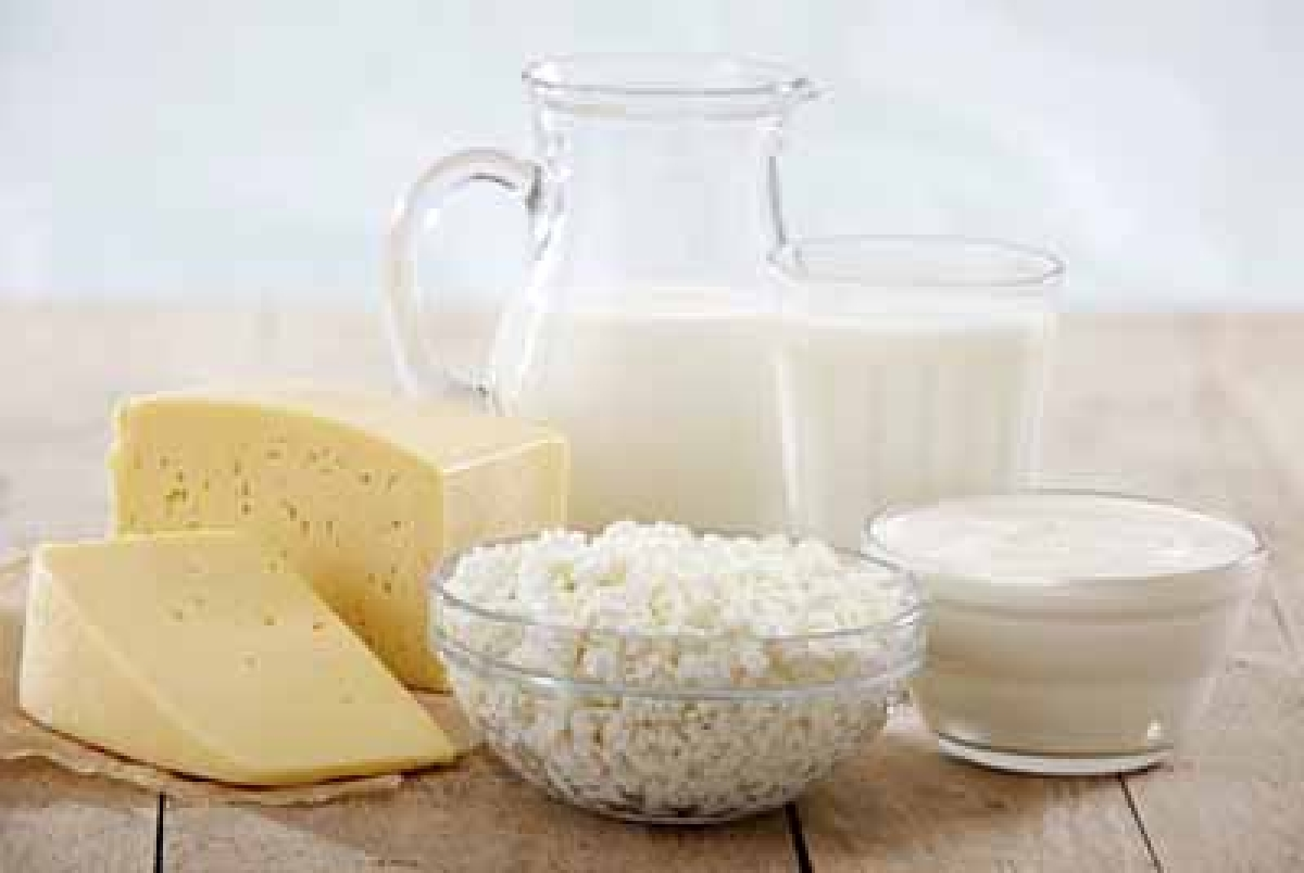 Dairy products make  probiotics more potent