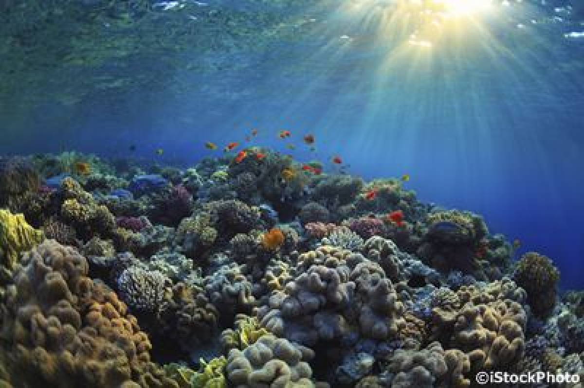 Coral bleaching causing permanent change to fish
