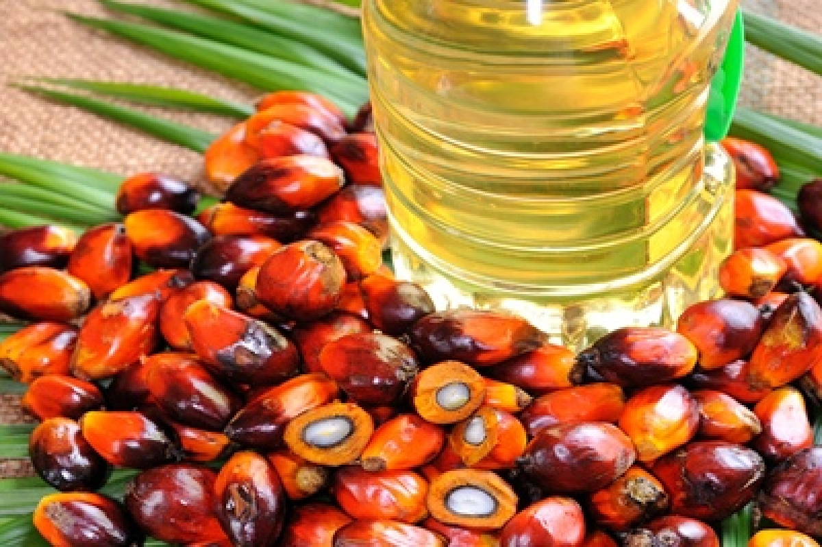 Cooking oil that can be used 80 times over