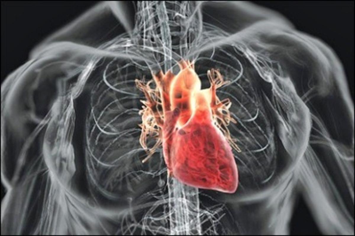 City reports 7th heart transplantation