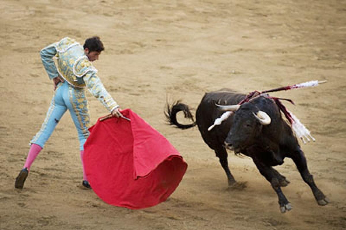 Bull fights may fetch good revenue for farmers: Goa CM
