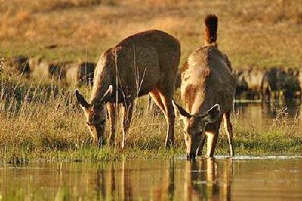 Wild animals' birth pattern is at risk
