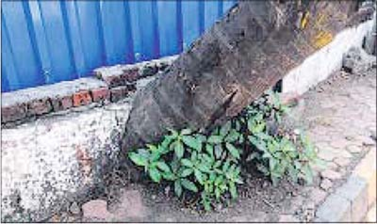 Adhere to norms on protecting trees: MoEF