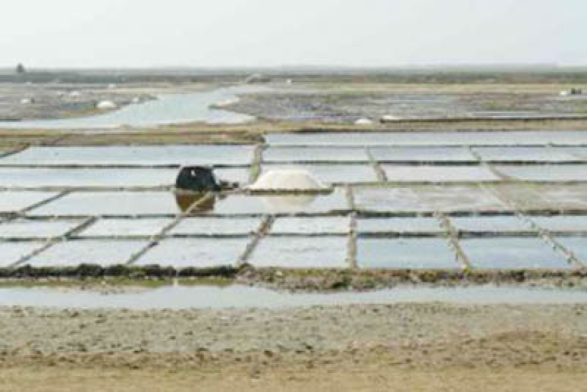 State govt not likely to get salt pan land for housing projects