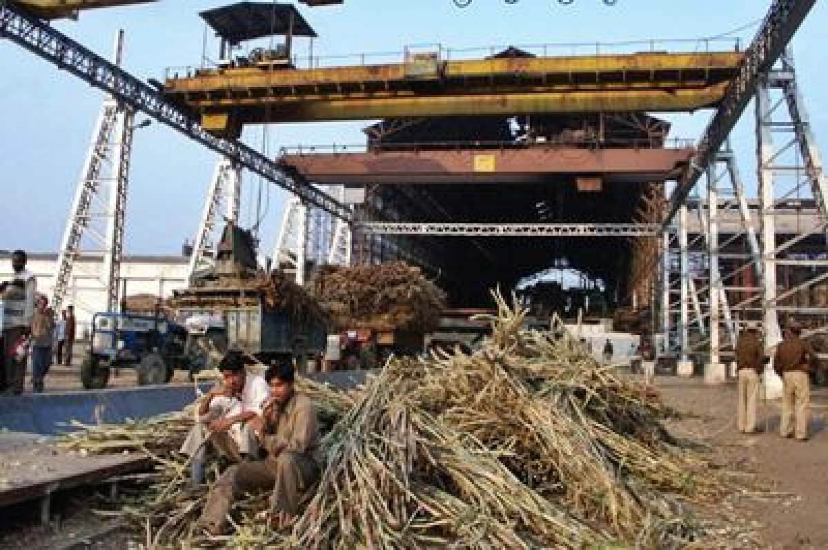 New session of sugar mills in Meerut to begin from November