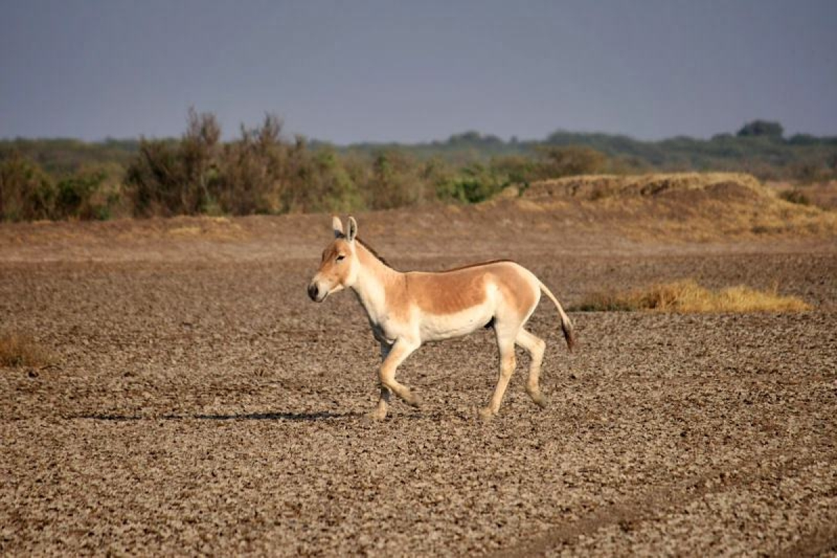 Little Rann of Kutch<br />Picture credits: Faiyaz Hawawala / Wikipedia