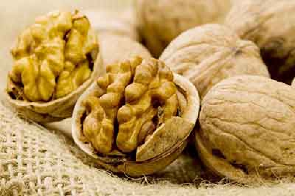 Eating walnuts good for heart