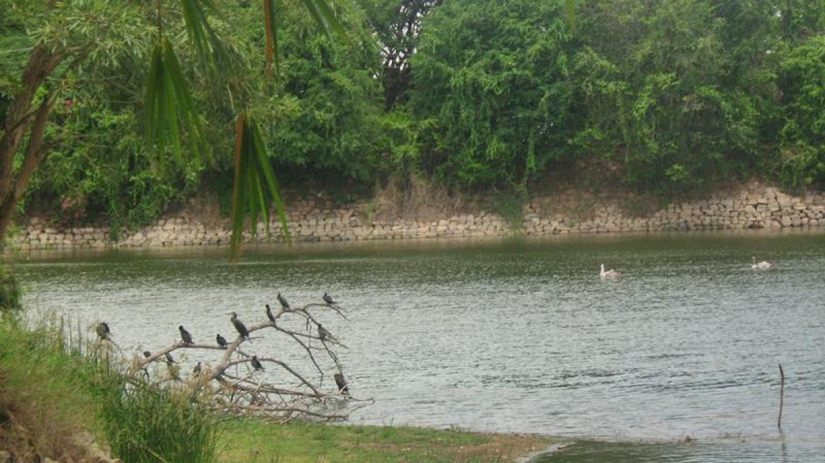 Karanji Lake<br />Picture credits: www.holidayiq.com