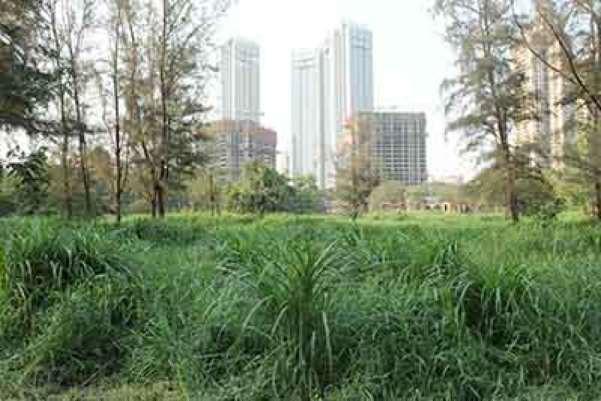 Aarey Colony is a proposed  eco-sensitive zone: MoEF