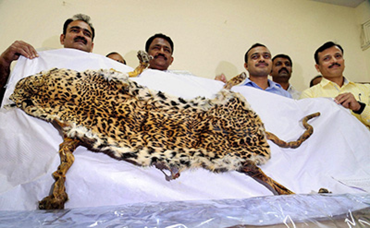 Mumbai Crime Watch:  Two from Pune held in Thane with leopard skin worth Rs 10 lakh