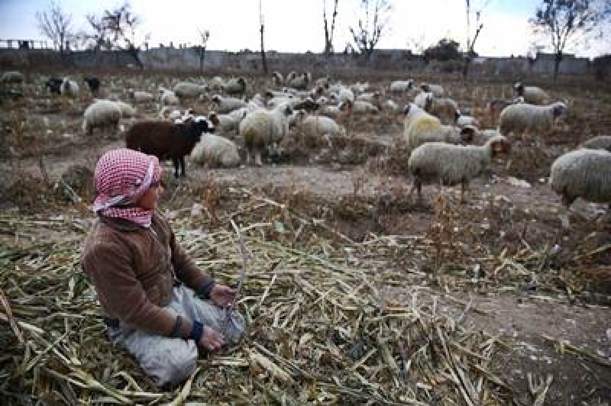 Leading livestock expert criticises PM Modi's Rs 20 lakh crore package; says centre and state are insensitive to animal husbandry farmers