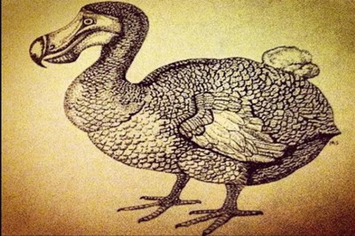 Dodos `not` as dumb as we thought