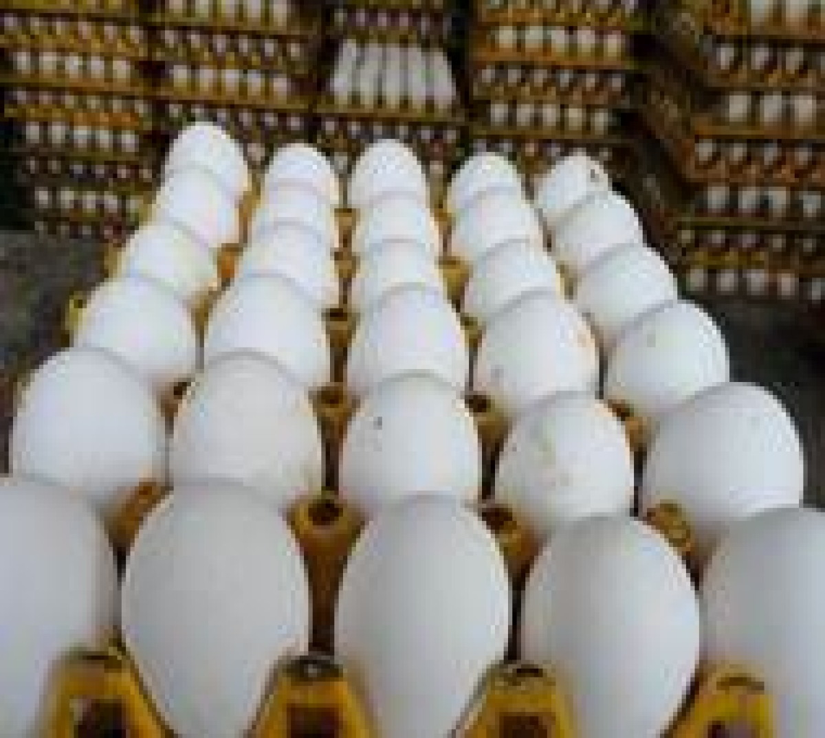 Mumbai: Hardboiled reality; Egg prices surging