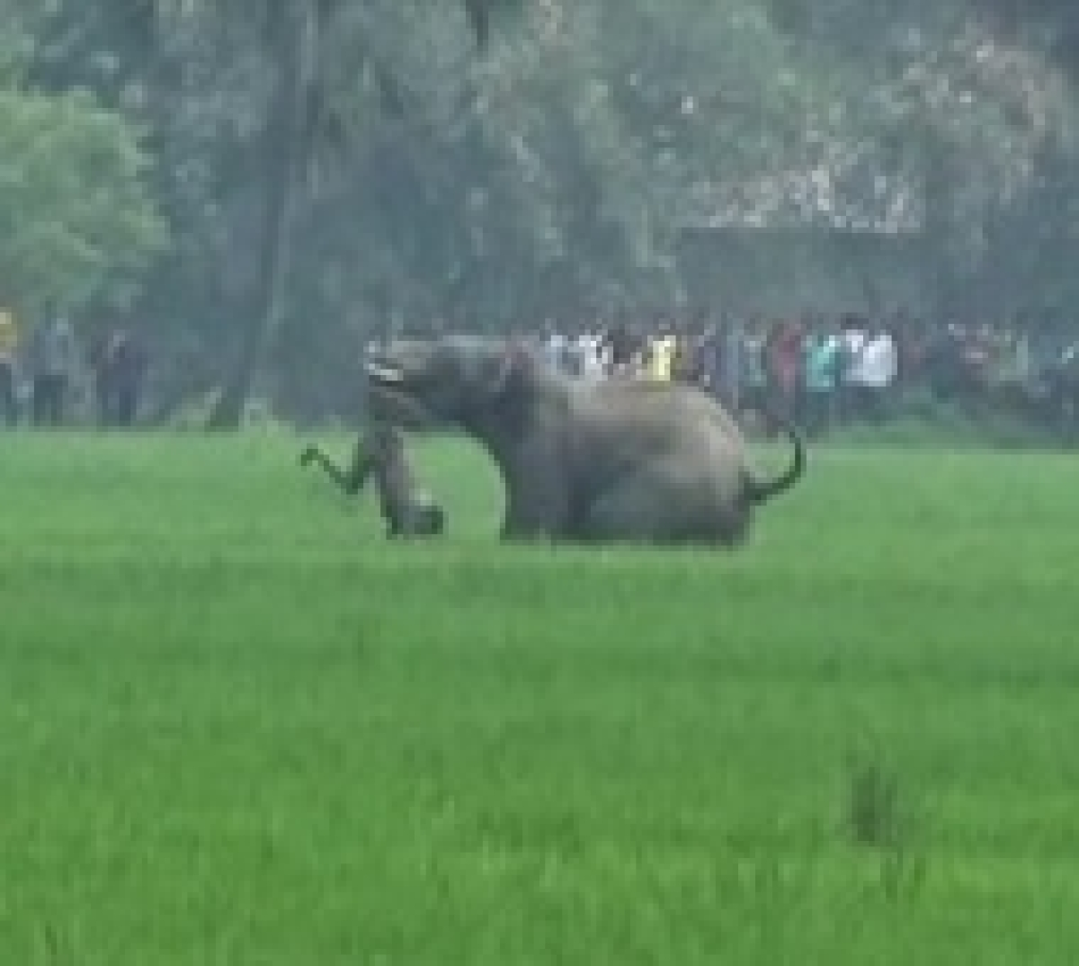Elephant attack: Death toll rises to five in West Bengal