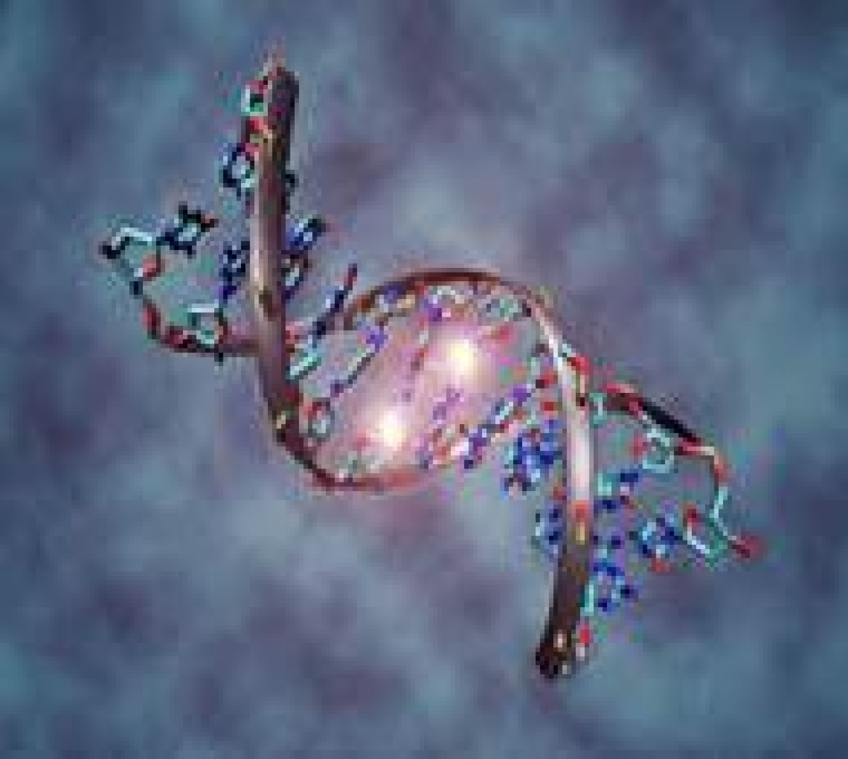 Study shows how oxygen can kill DNA