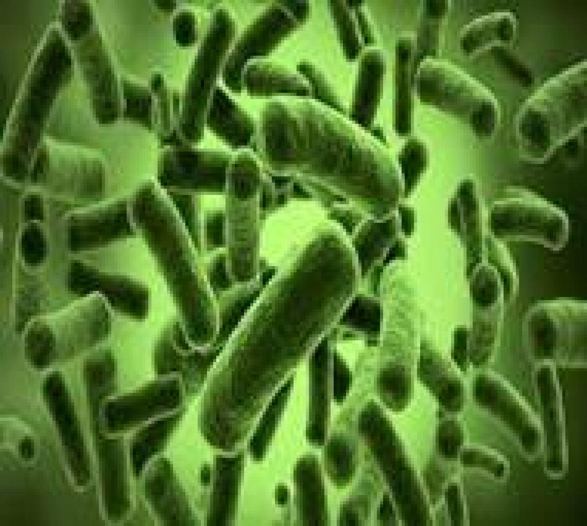 'Good' gut bacteria can help prevent cancer