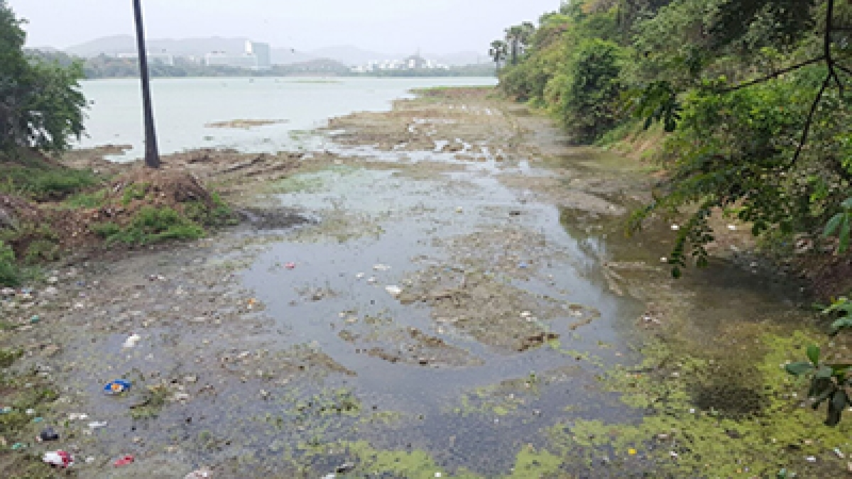 NGO wants Mumbai's Powai Lake to be declared as 'Crocodile Park'