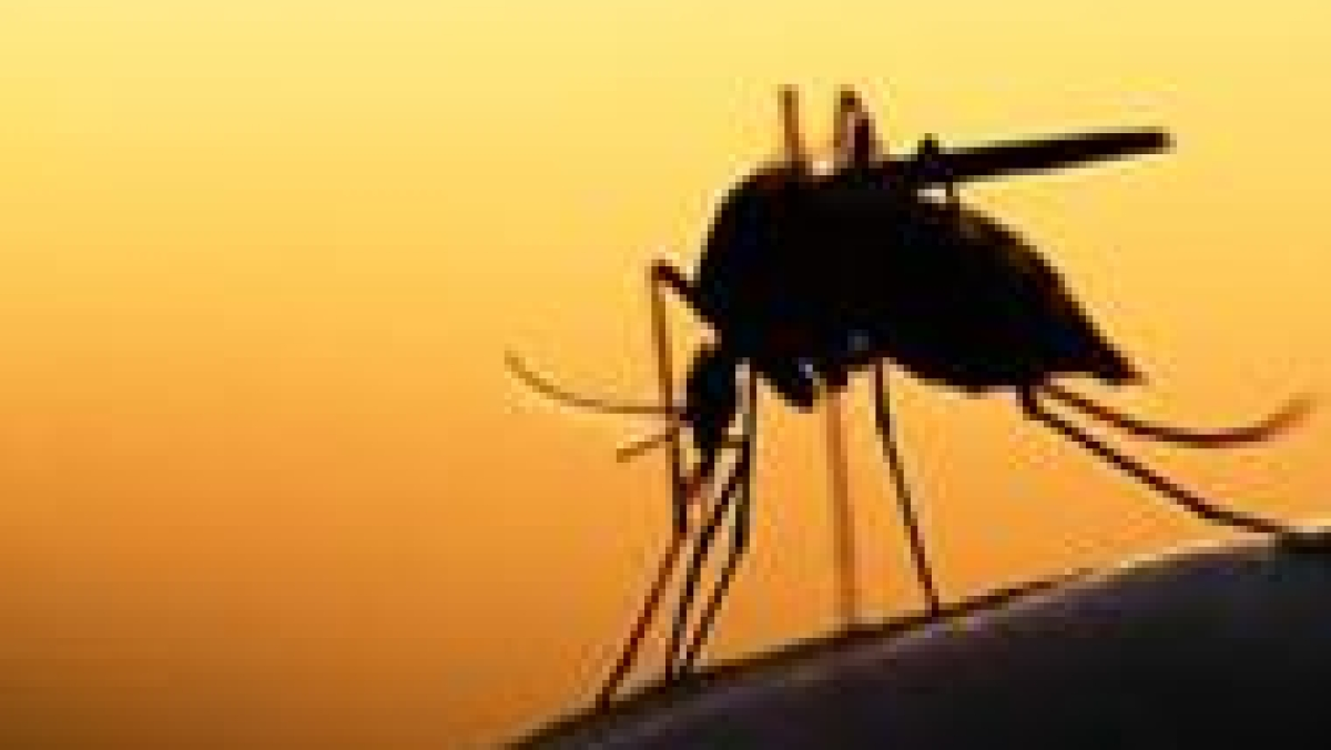 Cuffe Parade watchmen blame Metro 3 construction for outbreak of malaria