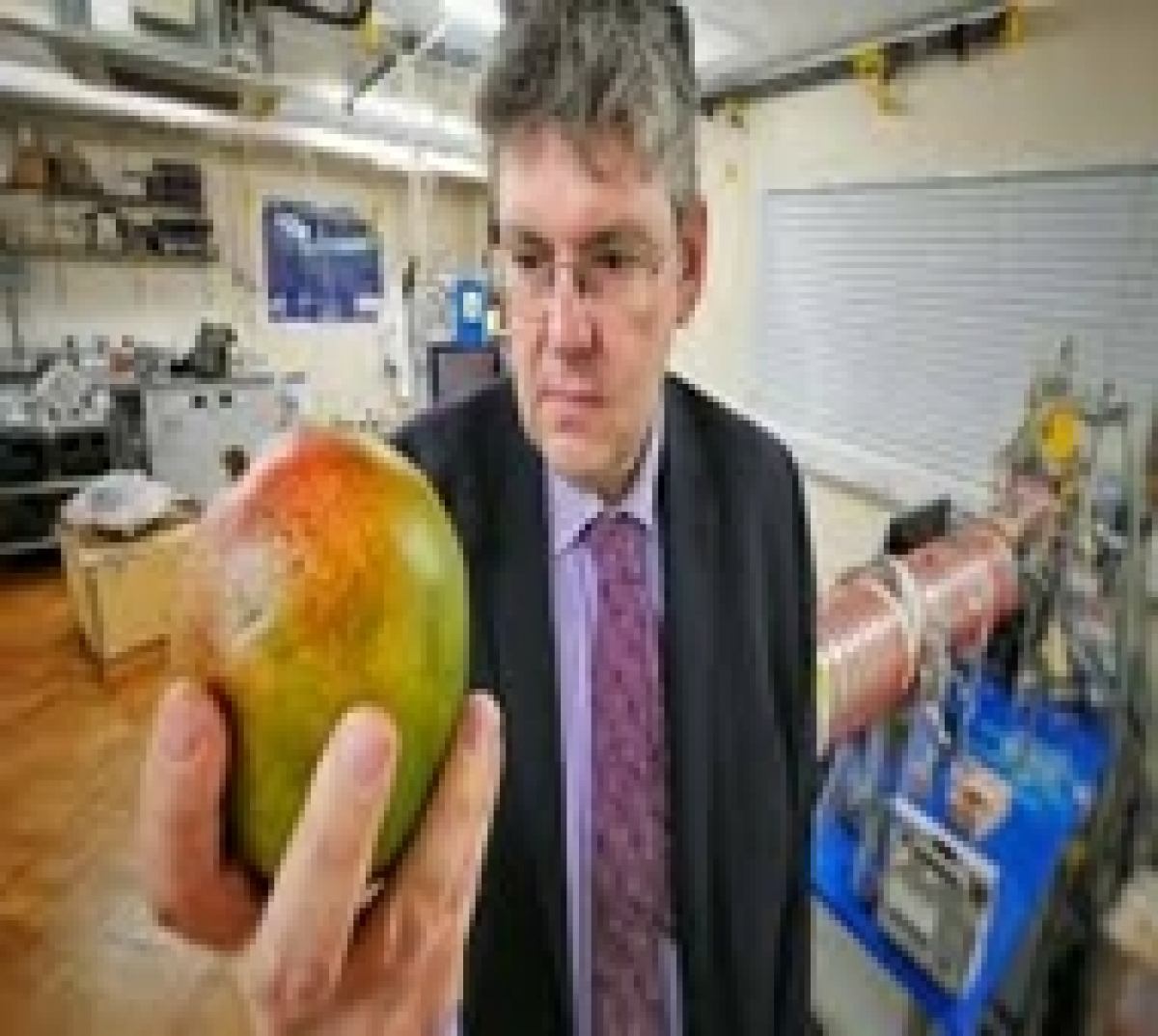 New way to 'sniff' ripeness of mangoes