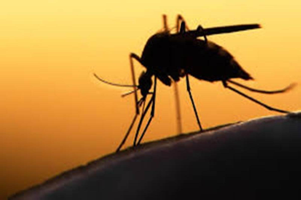 Zika epidemic may end within 3 years: Study