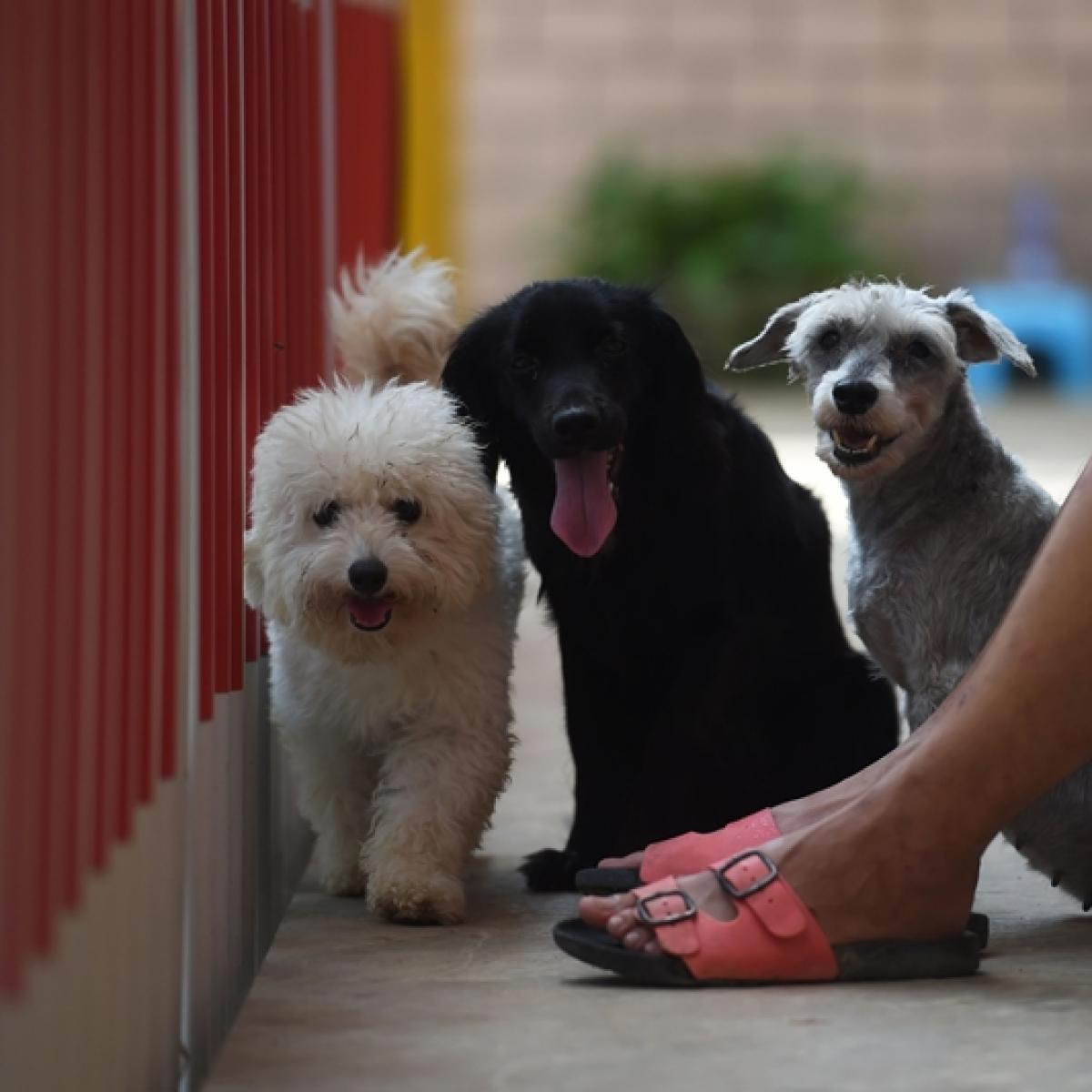 Don't abandon pets, owners told writes Nozia Sayyad