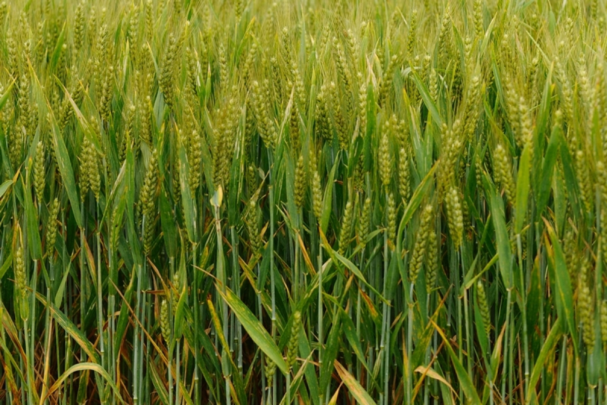 Govt allows state-run GIs to sell PM's crop insurance schemes