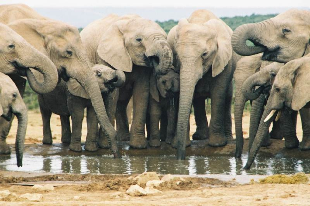 12 elephants to be relocated to Corbett from Karnataka