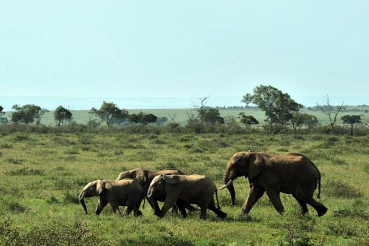 Saved 8-10 elephants by killing 2, says Bengal forest dept