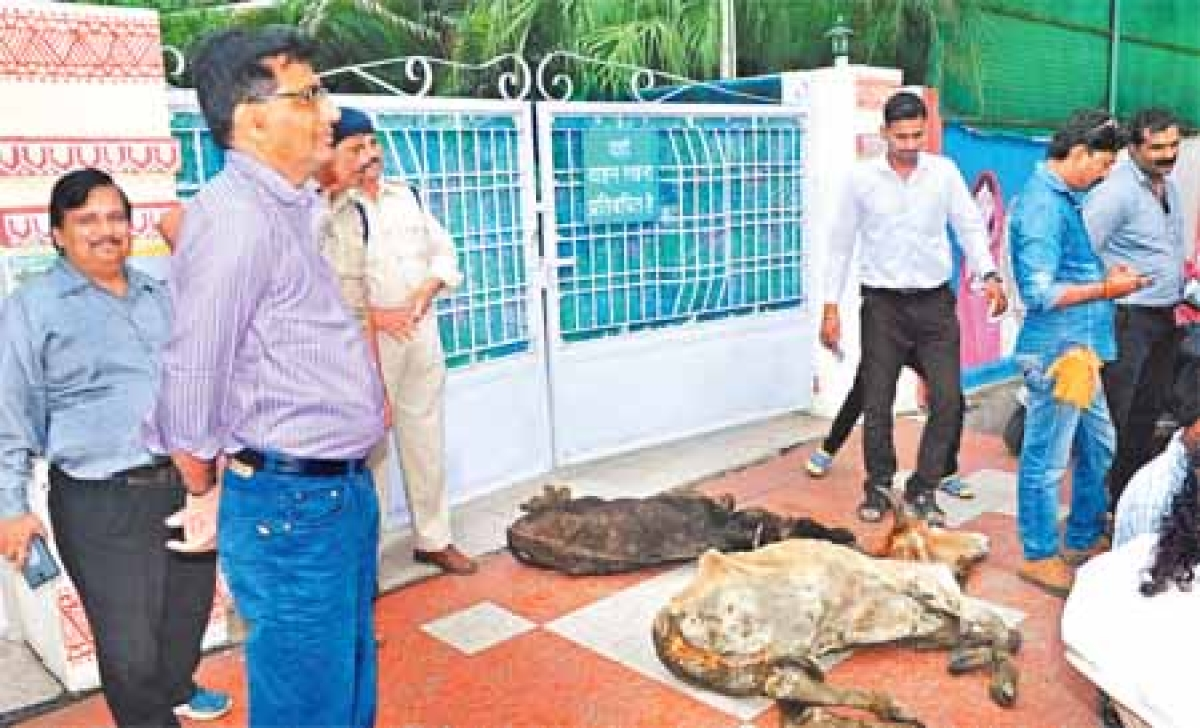 Pro-Hindu activist, who took out cows from kanji house, booked