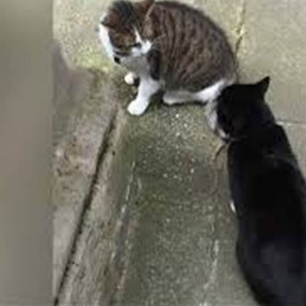 Super pets: Cats save couple from landslide in Italy