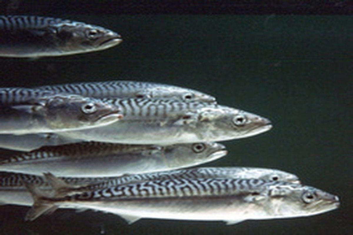 Disappearing trick of fish can fool animals with super sight