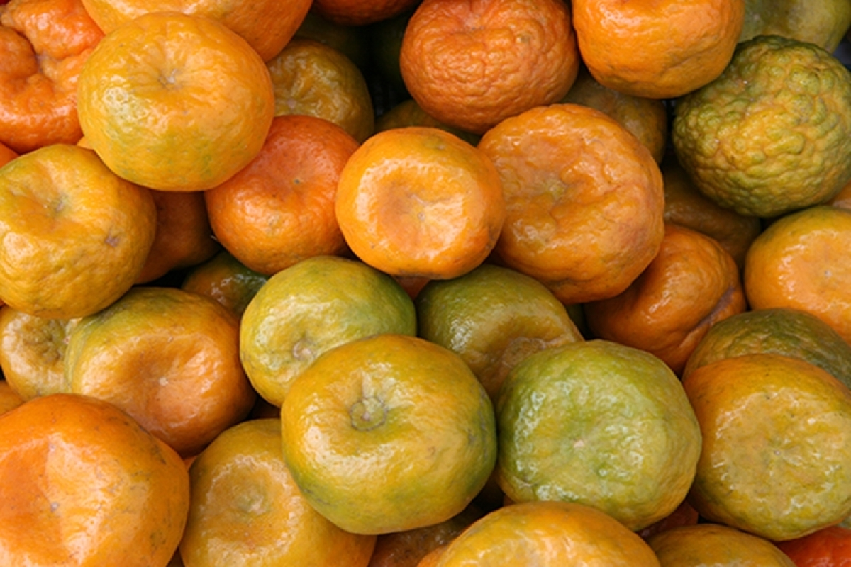 Eat oranges to ward off heart disease, diabetes risk