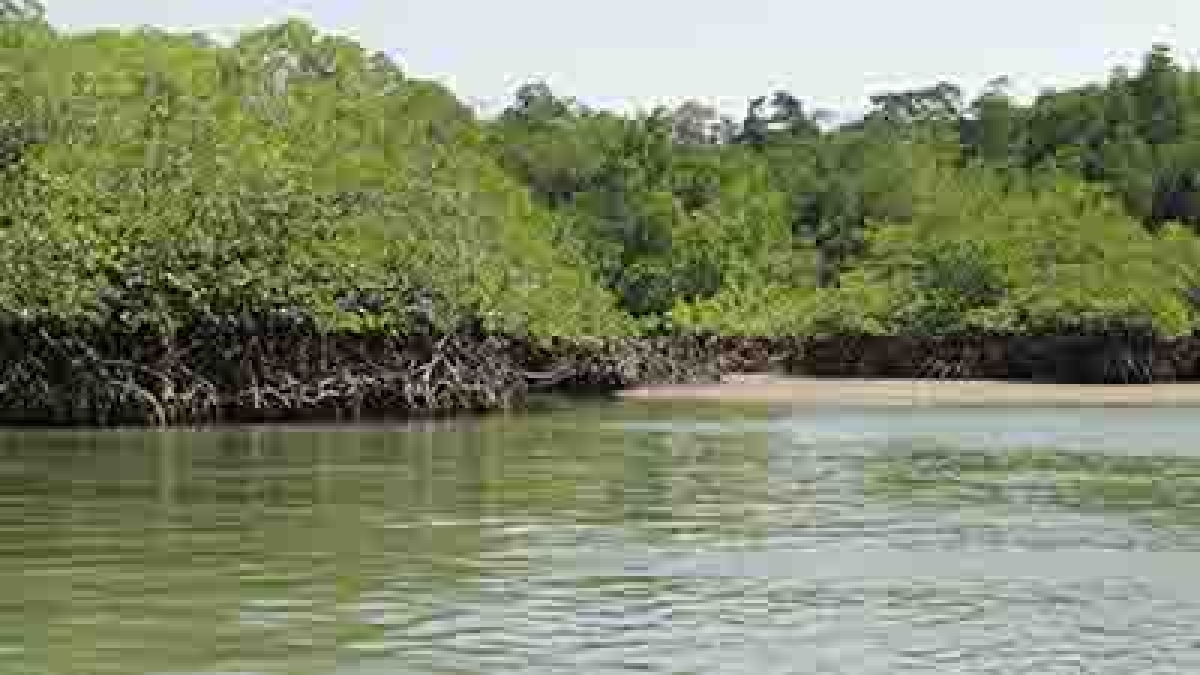 Rampant destruction of mangroves over illegal construction