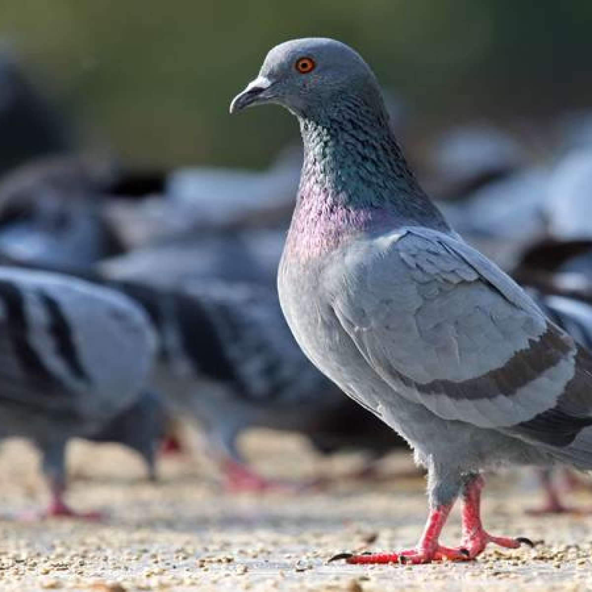 Mumbai: Andheri citizen's group fights pigeon menace