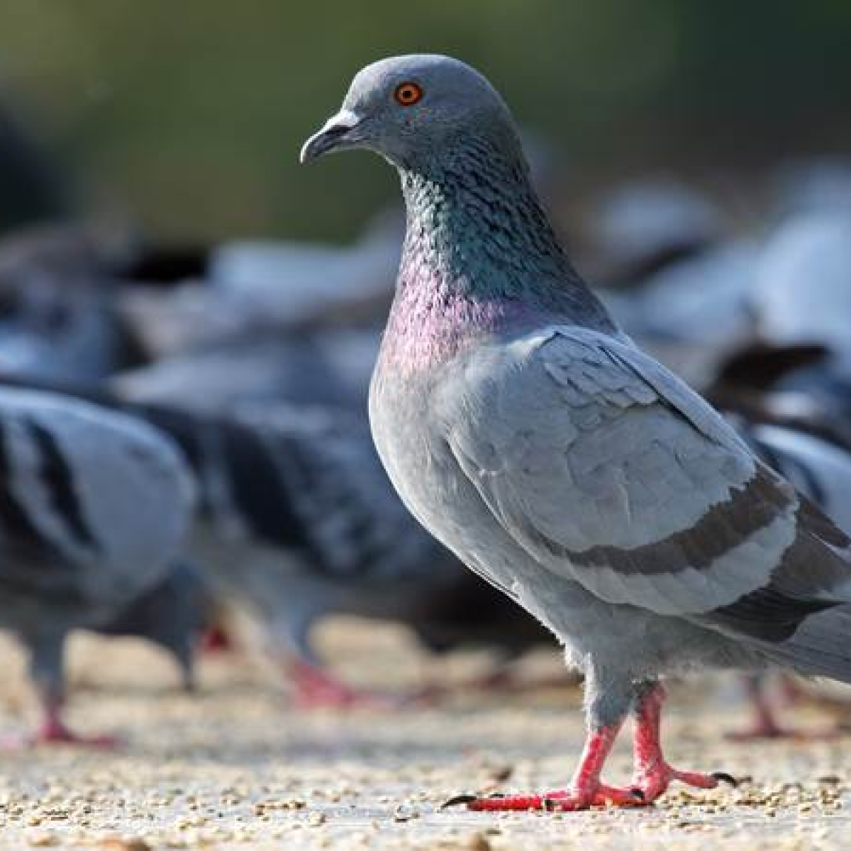 CIA unveils Cold War spy-pigeon missions: Report