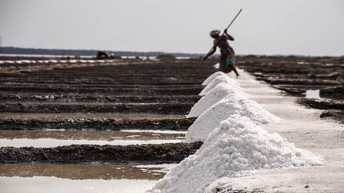 Mumbai: Only 20% of salt pan land to be used for affordable housing