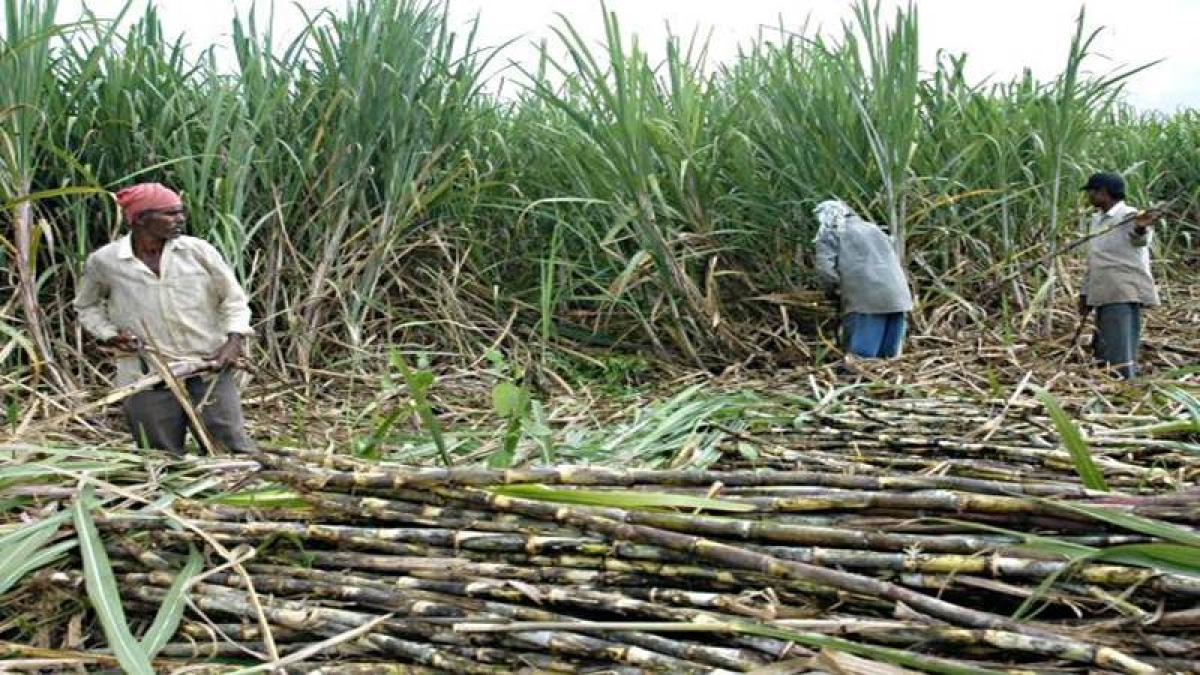 Maharashtra govt reconstitutes Sugarcane Price Control Board, appoints 10 non-government members