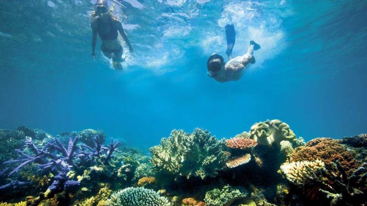 Biologists exploring ways to save dying Great Barrier Reef