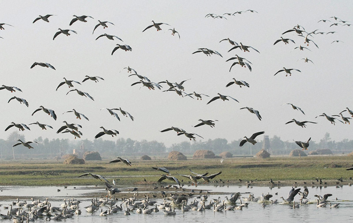 Birds eat million tonnes of insects, keeping them under control