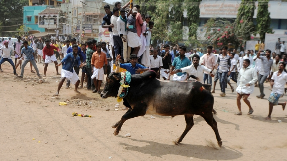 Jallikattu: Miffed with Centre, AIADMK says govt. omitted their request