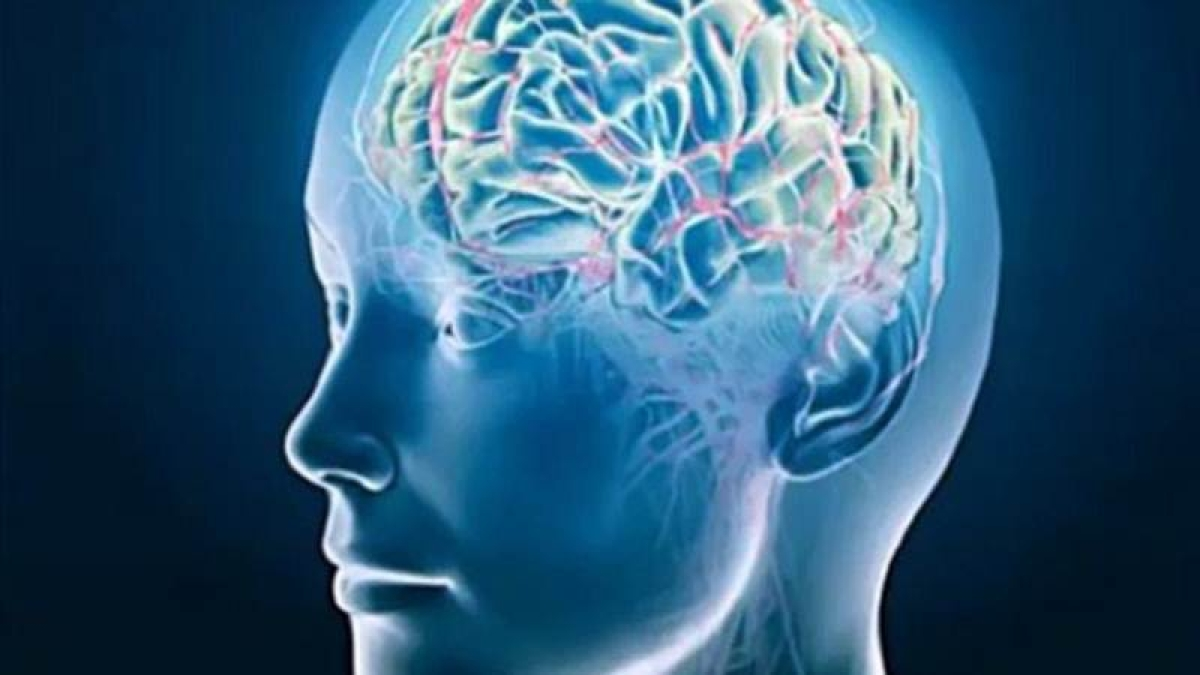 Now multiregional brain-on-a-chip to study disorders