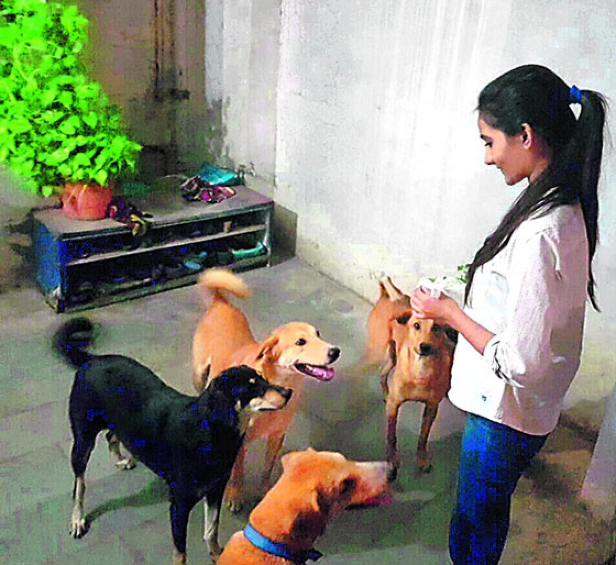 Indore: 'Blessy' helped the Ozas overcome difficult times