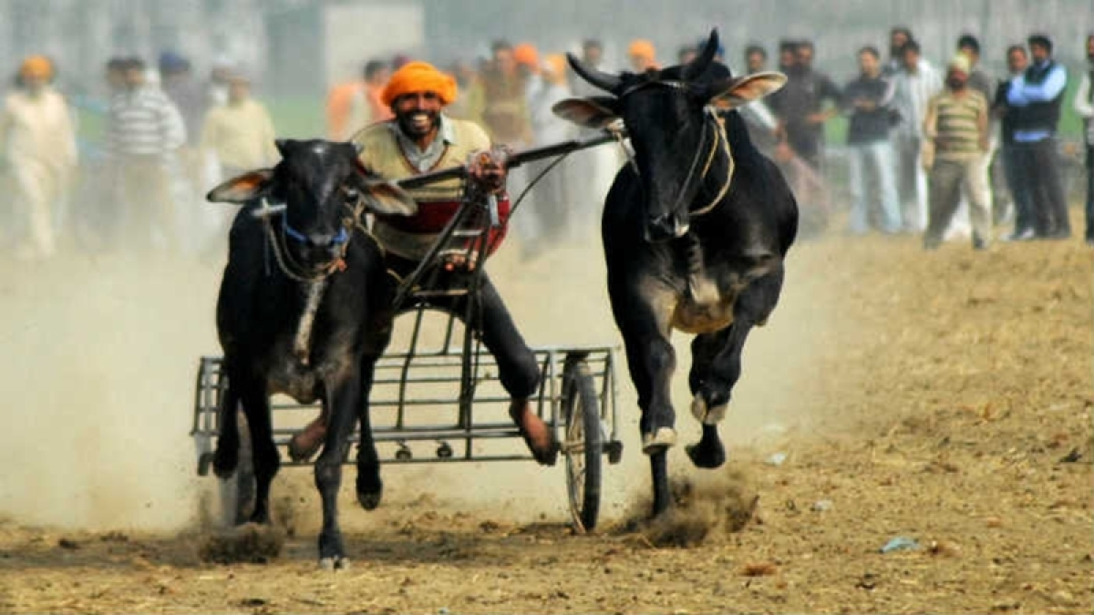 Act of making a bull run is itself cruelty says Bombay High Court