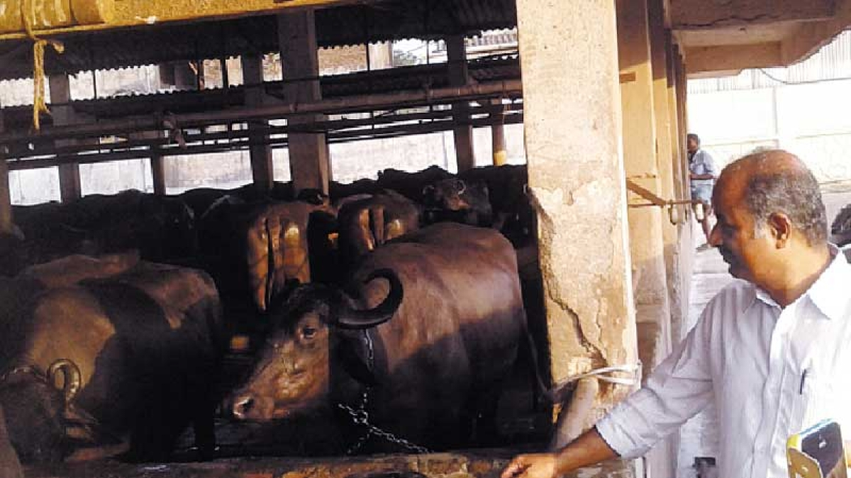 Private dairies urge TN govt to allow partial operation during the complete lockdown