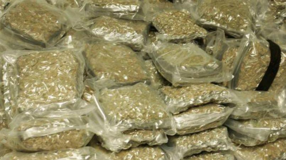 Five held with 130 kg cannabis by Anti Narcotics Cell of Mumbai crime branch